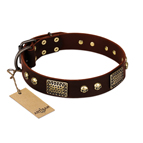 'Magic Amulet' Brown Leather Dog Collar with Skulls and Plates