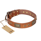 'Catchy Look' FDT Artisan Decorated Tan Leather Dog Collar
