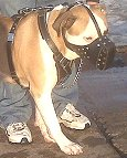 Leather Dog Muzzle for Pitbull Agitation Training