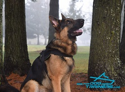 *Luke Presents His Awesome Harness for Any Weather Acvtivity - Click Image to Close