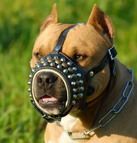 Loop Leather Studded Dog Muzzle for Pitbull Training and Walking