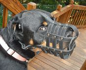 Madison happy with her Everyday Light Weight Super Ventilation Rottweiler muzzle - product code M41