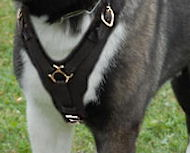 Alaskan Malamute Exclusive Handcrafted Leather Dog Harness