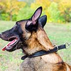 Malinois Leather Choke Collar