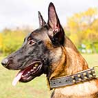 Malinois Chic Spiky Leather Collar with Nappa Padding