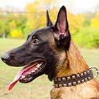 "Malinois Fashion ""Caterpillar"" Leather Collar"