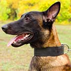 Malinois Super Strong 2 inch Wide Leather Collar for Walking