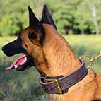Malinois 2 ply Leather Agitation Training Collar