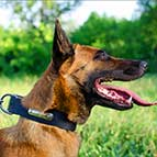 Malinois Leather Collar with ID Plate