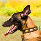 Malinois Vintage Leather Collar with Magnificent Oval Plates