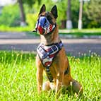 Malinois Handpainted Leather Canine Harness - American Pride Style