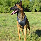 Attack/Protection Training Malinois Leather Dog Harness with Padded Chest Plate