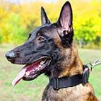 Malinois Weatherproof Nylon Dog Collar with Quick Release Buckle