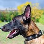 Malinois Designer Nylon Collar with Silver Circles