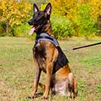 Malinois Nylon Dog Harness for Rehabilitation and Winter Warming