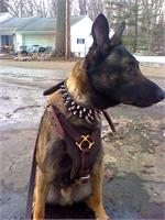 Malinois 3 Rows Leather Spiked Dog Collar -S44