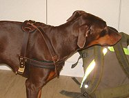 Tracking / Pulling / Agitation Leather Dog Harness For Doberman H5_2