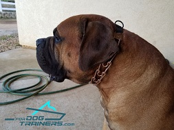 Curogan Mastiff Dog Collar - Training Dog Prong Collar by Herm Sprenger - 1/6 inch (4.0 mm) link diameter