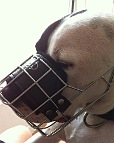Max wearing our exclusive NEW Pitbull Revolution Design Wire Dog Muzzle - M9-1