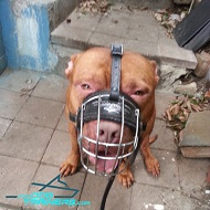 Wire Cage Muzzle - Best Dog Muzzles for Pitbulls