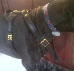 Nelson Great Dane Looking Handsome in his Agitation / Protection / Attack Leather Dog Harness - H1_11