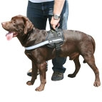 All Weather Harness for Labrador made of High quality nylon material