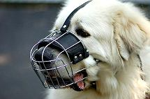 Noah wearing our exclusive Wire Basket Dog Muzzles M4