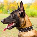 Black Nylon Spiked Belgian Malinois Collar