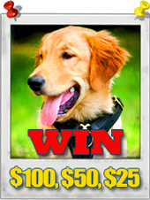 Dogs Photography Contest