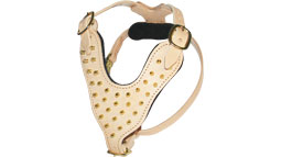 Brass Spiked Padded leather dog harness Created To Fit Pitbull and similar breeds - H9-Brass