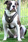 Nappa Padded Leather Dog Harness for Pitbull Walking/Training - Luxury Accessory