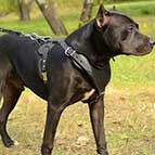 Adjustable Leather Malinois Harness for Heavy Duty Work