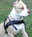 Easy Adjustable Strong Leather Canine Harness for Pitbull Training/Walking and Agitation Work H5_1