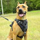 Agitation / Protection / Attack Leather Dog Harness - H1
