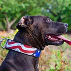 Pitbull Handpainted Leather Collar - American Pride Style