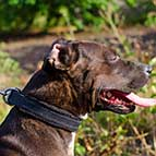 Efficient Pitbull Padded Leather Collar for Attack Training