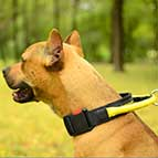 Pitbull All Weather Nylon Collar with Handle and Quick Release Buckle
