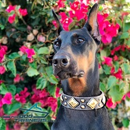 *Danke Looks Fabulous in Designer Leather Dog Collar