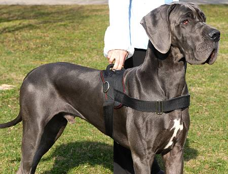 nylon dog harness for great dane with handle