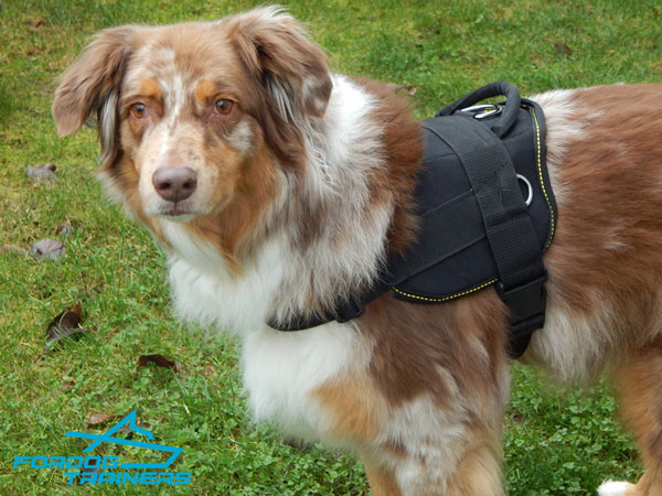 *Buddy Looks the Best in Nylon Dog Pulling Harness for Australian Shepherd