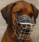 Maya is fancy in new Revolution Design Dog Muzzle - M9