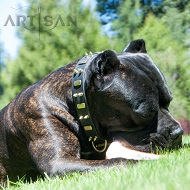 *Roman Cane Corso Looks Even More Magnificent in Artisan Spiked Leather Dog Collar