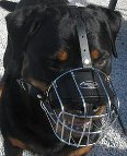 Ares loves new Basket Dog Muzzle (All Sizes)