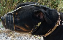 *Mpouas is outstanding in Royal Nappa Leather Dog Muzzle - product code M88_2