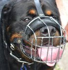 Tonka in stylish Basket Dog Muzzles (All Sizes)