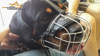 Happy Rottweiler in our Lightweight Wire Cage Dog Muzzle