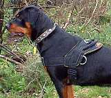 All Weather dog harness for tracking / pulling Designed to fit Rottweiler - H6_1