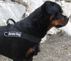 Rottweiler better control everyday all weather dog harness - H17