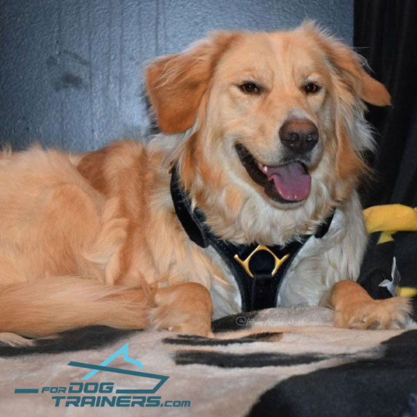 *Sadie Presents Leather Dog Harness for Agitation/Obedience Training and Walking