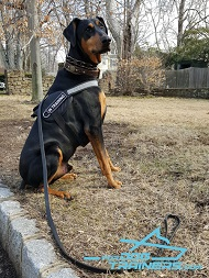 *Saxon in Working Dog Harness - Durable Nylon Doberman Harness